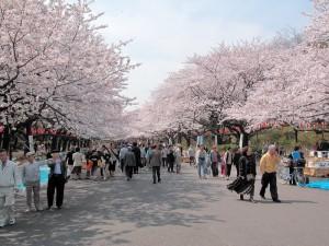 学校周辺上野